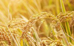 「枯葉剤」を製造した化学メーカーの「遺伝子組み換え作物」が日本の食を脅かしている