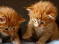 """今日は""""猫の日""""! もふもふは出来ないけど……癒されたい人に贈る【猫まとめ】"""