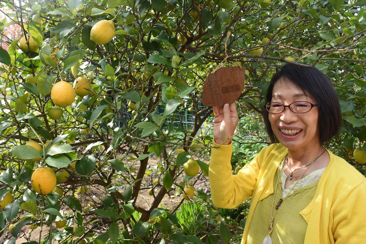 父が植えたレモンが今年も実をつけた。1号のプレートと苅谷さん