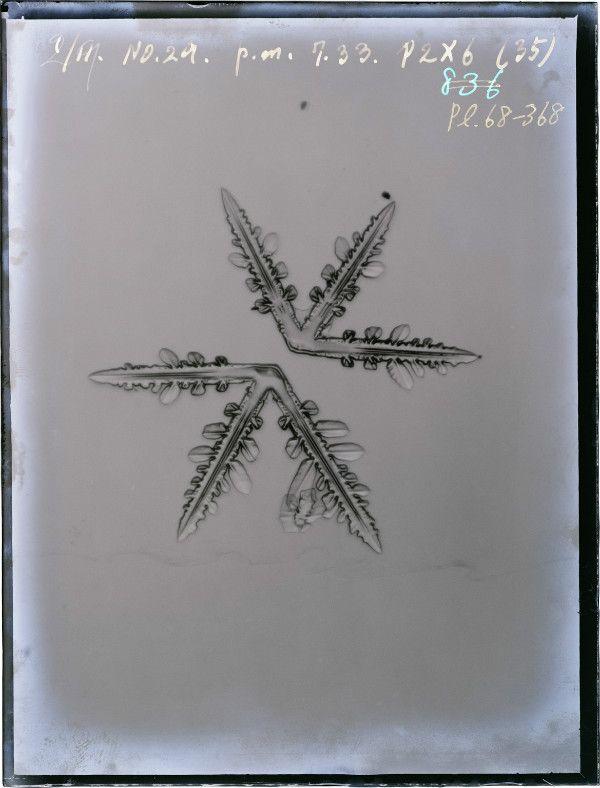 """中谷宇吉郎が遺した研究素材 """"Three-branched crystal"""" Kaga City, Nakaya Ukichiro Foundation"""