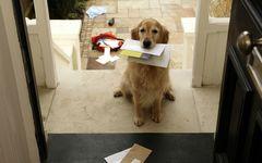 すぐできる整理術「玄関で郵便物を仕分け。ハサミと黒ペンで効率アップ」