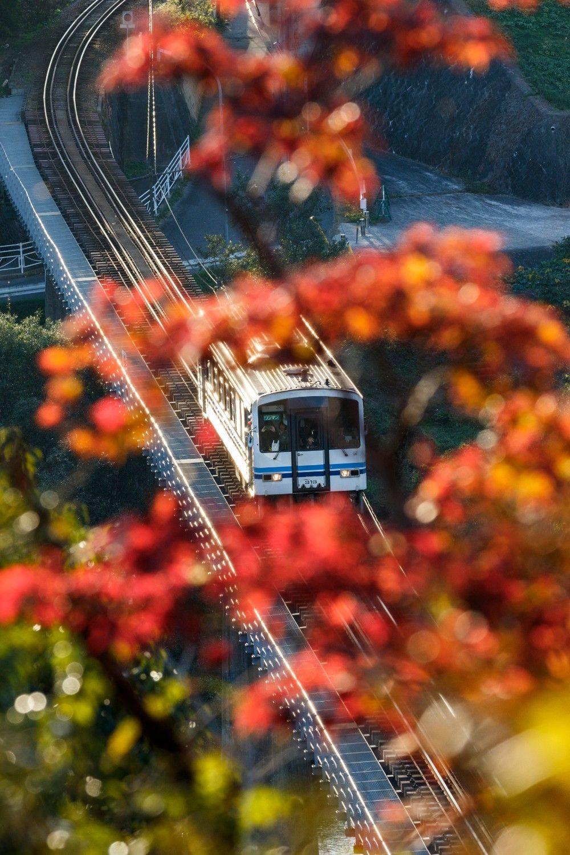 三次の市街地に向けて走る江の川を渡る三江線。紅葉が見頃の尾関山公園から見下ろす(粟屋~尾関山)