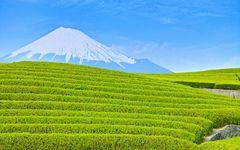 静岡新聞が選んだ2017年の重大ニュース第1位は「県製茶条例廃止へ 『着味、着色』禁止を転換」