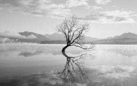 「新型うつ病」を叩いた人たちの認識不足――「うつ」に関する10の誤解 7・8