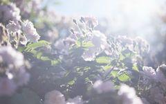 蜷川実花が撮る、父・蜷川幸雄の死を予感した美しき日々