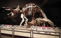 現代の「恐竜発掘調査」その舞台裏とは?――現役調査員が明かす真実