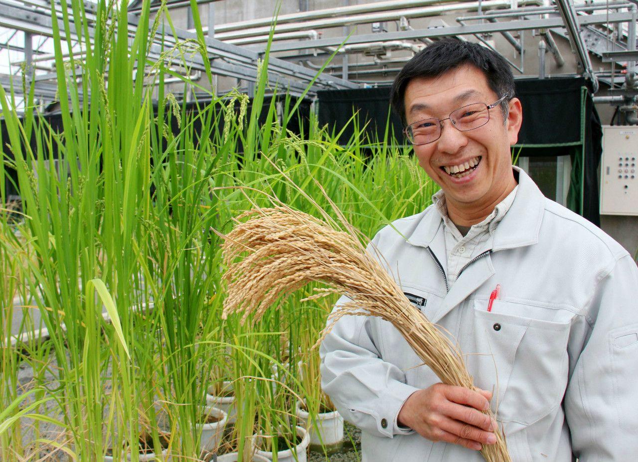 富山県の新銘柄米「富富富」を手にする、県農業研究所の研究員 ©共同通信社