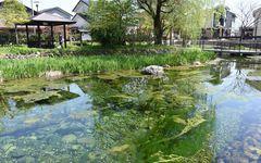 福井県大野市の家庭は、なぜ水道を引かないのか?