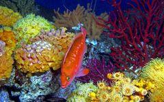 新江ノ島水族館「クラゲ展示はここから始まった」――水族館哲学2