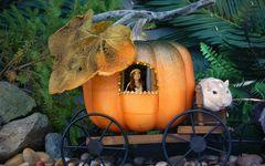 童話ではない! 現代版「かぼちゃの馬車」の落とし穴