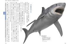 """サメたちはなぜ、4億年もの""""超長期政権""""を維持できたのか?"""