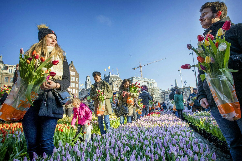 アムステルダムのチューリップがある風景 ©iStock.com
