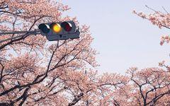 がんを患った美術家が、福島で病をおして見据えた風景