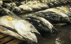 ウナギ、マグロの次に消える魚は?――食卓から消える大衆魚
