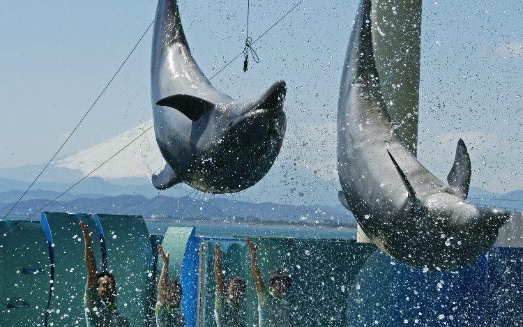 波しぶきの向こうの富士山を背景に、イルカがジャンプ! 新・富嶽三十六景。