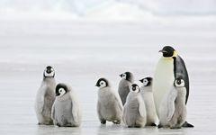 なぜ南極観測隊はカナリアを連れて行ったのか?