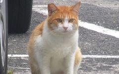【最終回を読む】猫の命を守るために闘う人々の証言