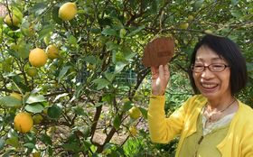 「泉北ニュータウンにレモンを植えよう」ある女性の発案が街を変えた
