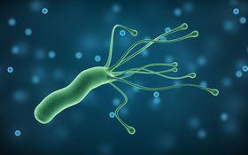 「胃がん」についての大きな誤解 ピロリ菌を除菌しても、胃がんのリスクは残る
