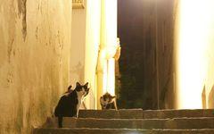 猫とパリジェンヌに学ぶ「幸せに生きる」ための5つのヒント