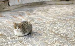 フランス人はなぜ猫に「生き方」を学ぶのか?