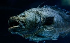 ダイオウイカだけじゃない「深海ブーム」の最先端とは